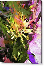 Daisy Breeze Acrylic Print