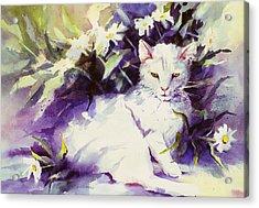 Daisy Cat Acrylic Print
