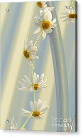Daisy Chain Acrylic Print