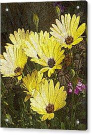 Daisy Daisy Acrylic Print by Tom Romeo