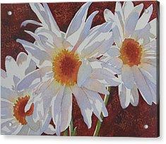 Daisy Dazzle Acrylic Print by Judy Mercer