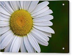 Daisy Detail Acrylic Print