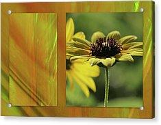 Acrylic Print featuring the digital art Daisy Diptych by Irma BACKELANT GALLERIES