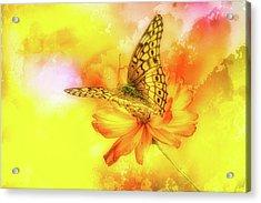 Daisy For A Butterfly Acrylic Print