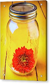 Daisy In Glass Jar Acrylic Print by Garry Gay