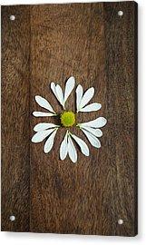 Daisy Petals On Wooden Background  Acrylic Print
