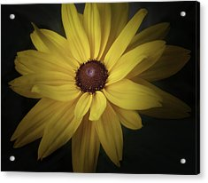 Daisy Acrylic Print by Tim Reaves