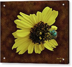 Acrylic Print featuring the photograph Daisy With Bee  by Donna Brown