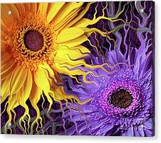 Daisy Yin Daisy Yang Acrylic Print