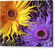 Daisy Yin Daisy Yang Acrylic Print by Christopher Beikmann
