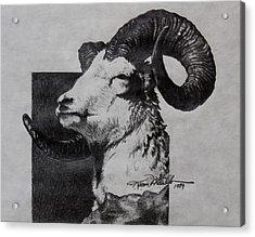 Dall Ram Acrylic Print