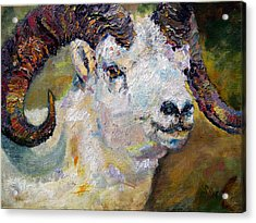 Dall Sheep Ram Oil Painting Acrylic Print