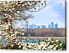 Dallas Through The Dogwood Flowers Acrylic Print by Tamyra Ayles