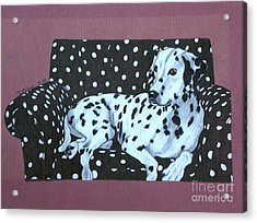 Dalmatian On A Spotted Couch Acrylic Print by Terri Mills