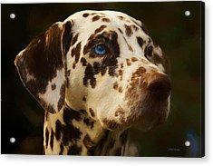 Dalmatian - Painting Acrylic Print