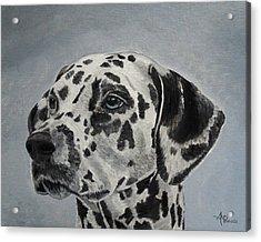 Dalmatian Portrait Acrylic Print