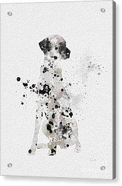 Dalmatian Acrylic Print