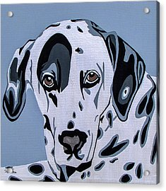 Dalmatian Acrylic Print by Slade Roberts