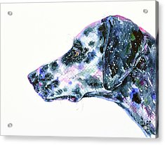 Acrylic Print featuring the painting Dalmatian by Zaira Dzhaubaeva