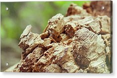 Damaged Wooden Beam Close Up Acrylic Print