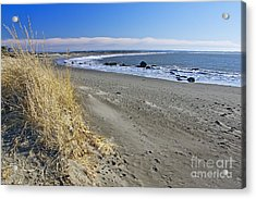 Damon Point Acrylic Print