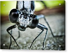 Damselfly In Late Summer Acrylic Print by Ryan Kelly
