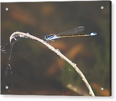 Acrylic Print featuring the photograph Damselfly by Lynda Dawson-Youngclaus