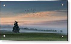 Dance In The Clouds Acrylic Print by Shenshen Dou