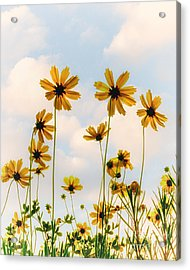 Dance Of The Coreopsis Acrylic Print by Tamyra Ayles