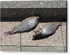 Acrylic Print featuring the photograph Dance Of The Dead Fish by Stephen Mitchell