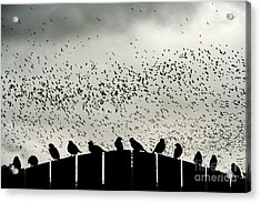 Dance Of The Migration Acrylic Print by Jan Piller