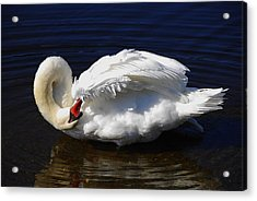 Acrylic Print featuring the photograph Dance Of The Swan by AnnaJanessa PhotoArt