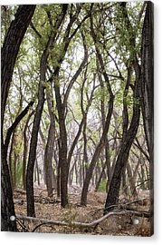 Dance Of The Trees Acrylic Print