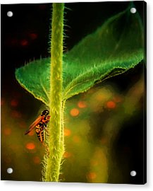 Dance Of The Wasp Acrylic Print