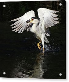 Dance On Water. Acrylic Print