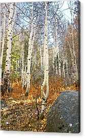 Acrylic Print featuring the painting Dancing Aspens by Larry Darnell