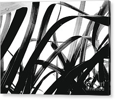Dancing Bamboo Black And White Acrylic Print by Rebecca Harman