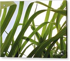Dancing Bamboo Acrylic Print by Rebecca Harman