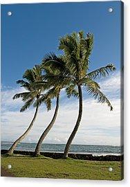 Dancing Coconut Tree Acrylic Print