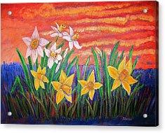 Dancing Daffodils Acrylic Print by Belinda Lawson