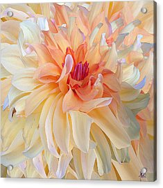 Dancing Dahlia Acrylic Print