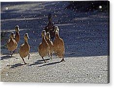 Dancing Duckies Acrylic Print by Sharon Talson
