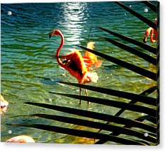 Acrylic Print featuring the painting Dancing Flamingo by Yolanda Rodriguez