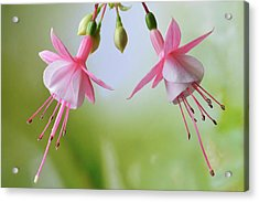 Acrylic Print featuring the photograph Dancing Fuchsia by Terence Davis
