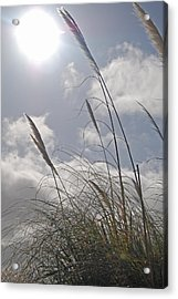 Dancing Grass Acrylic Print by Jean Booth