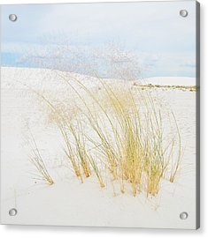 Dancing Grass Acrylic Print