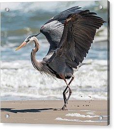 Dancing Heron #2/3 Acrylic Print by Patti Deters