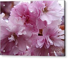 Dancing In A Springtime Shower Acrylic Print