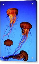 Acrylic Print featuring the photograph Dancing Jellyfish by Anthony Jones