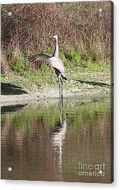 Dancing On The Pond Acrylic Print by Carol Groenen